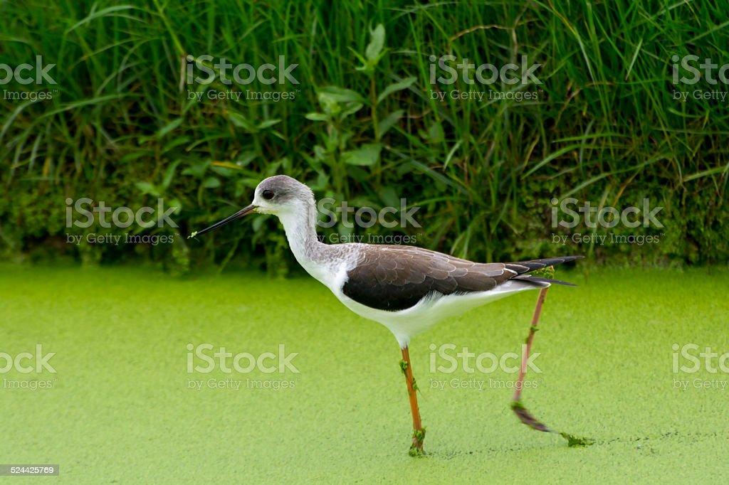 Walk on green royalty-free stock photo