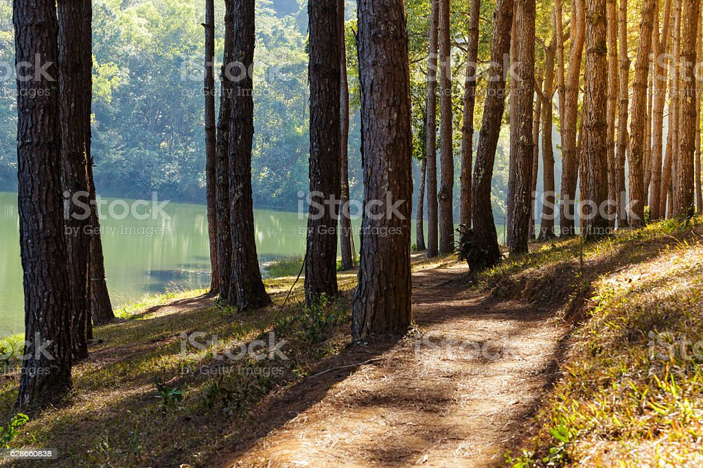 Walk path in camping site on mountain stock photo
