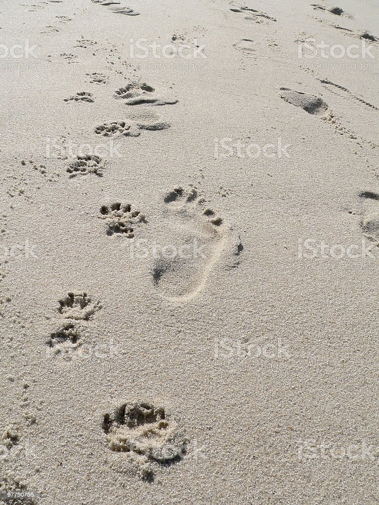 walk the dog beach scenery stock photo