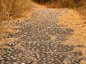 Walk way autumn forest. Dried brown grasses and leaves