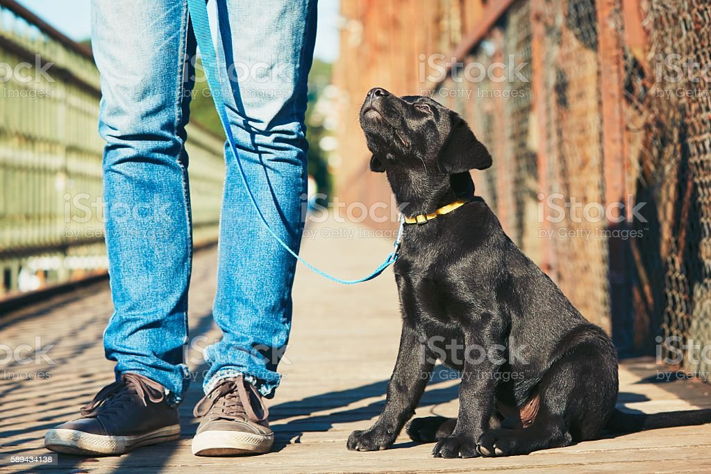 Walk with dog stock photo