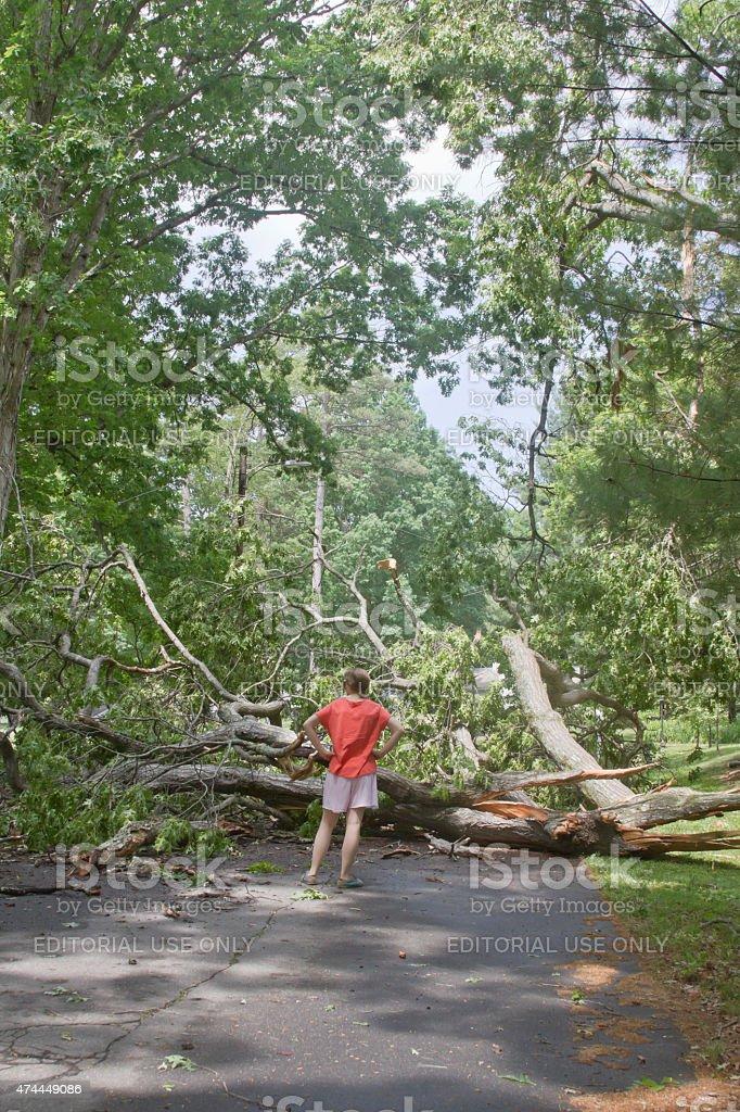 Walker Blocked By Tree Lying Across Road stock photo