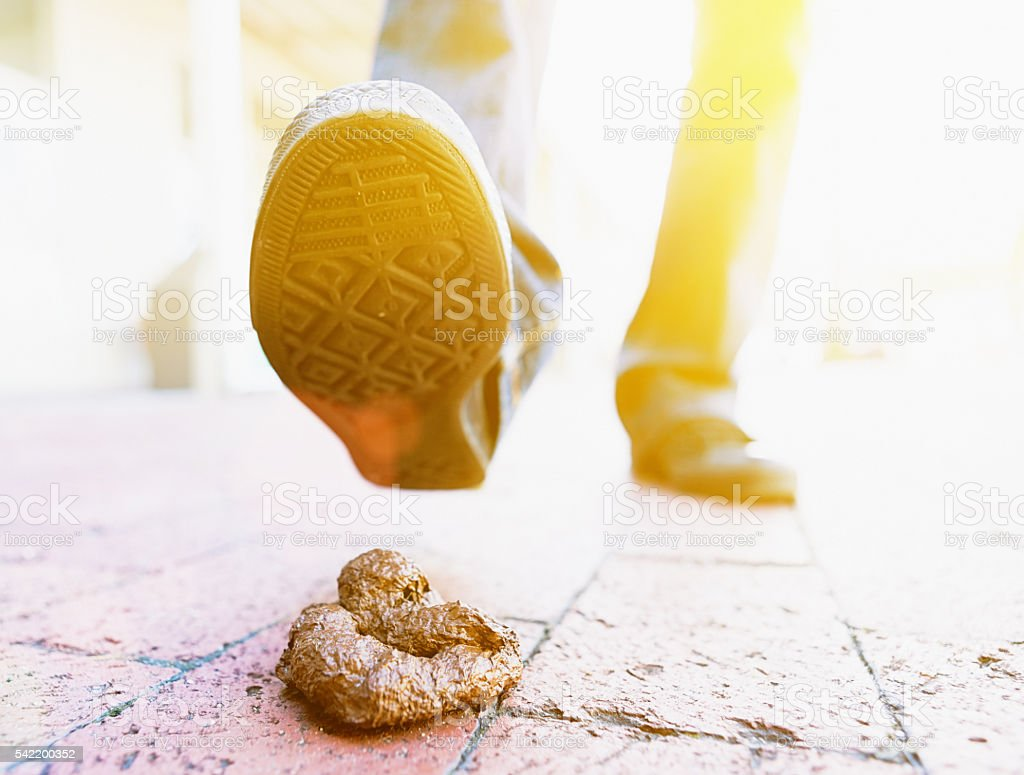Walker's shoe about to step in dog poo on pavement stock photo