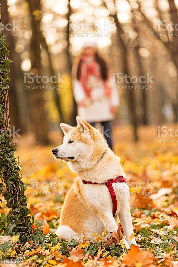 Walking a dog stock photo