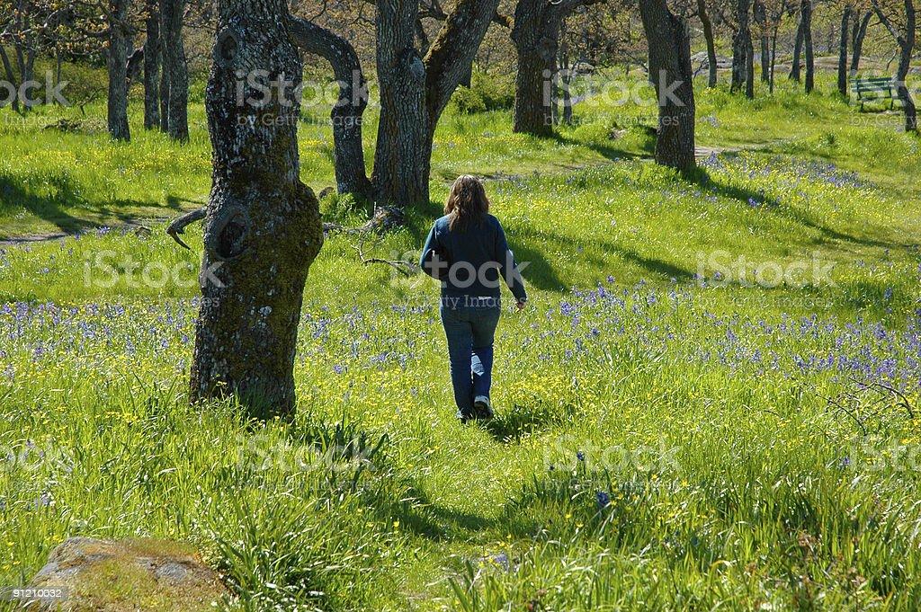 Walking among wildflowers royalty-free stock photo