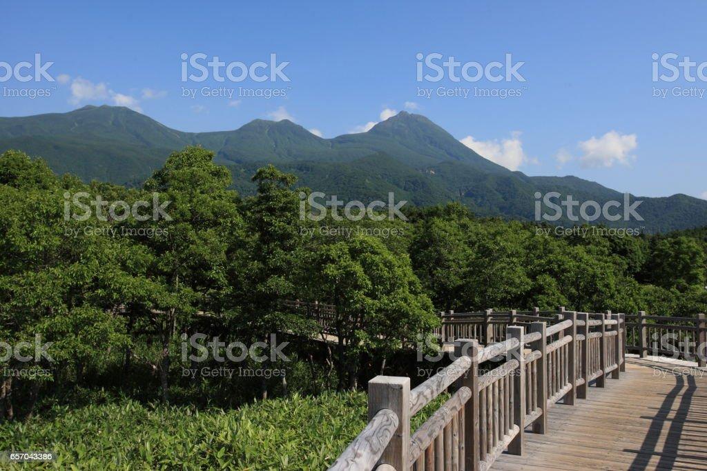 Walking course at Shiretoko Park stock photo