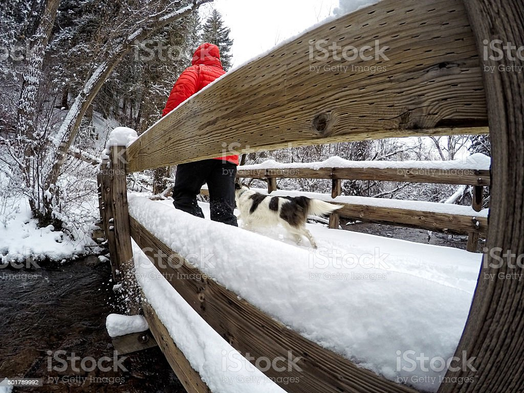 Walking Dog Across Scenic Bridge in Winter stock photo