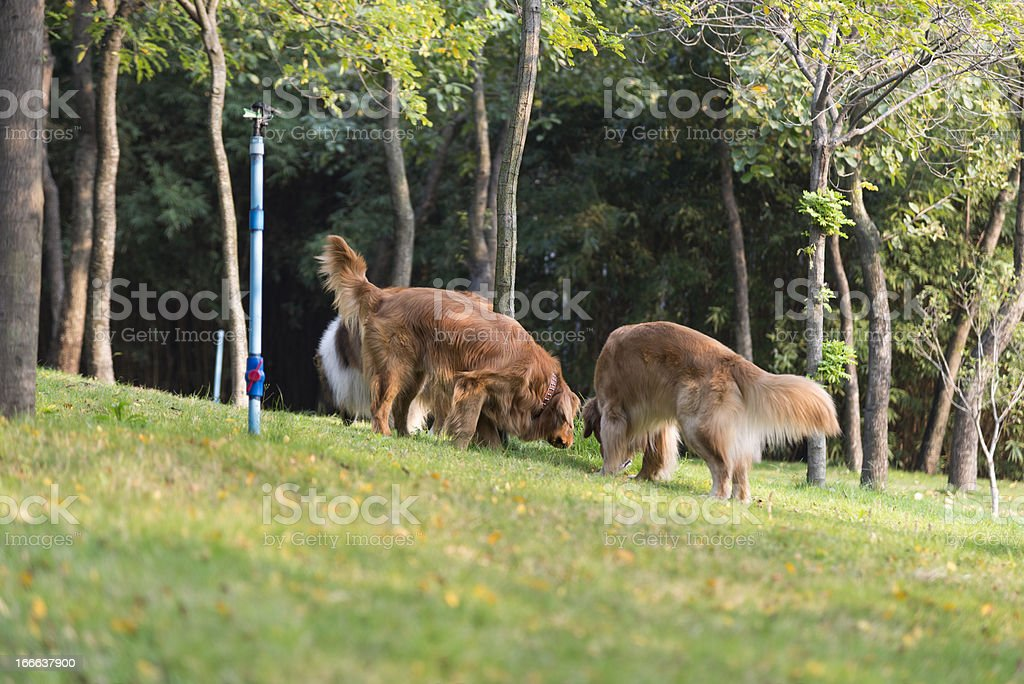 Walking dog in the park royalty-free stock photo