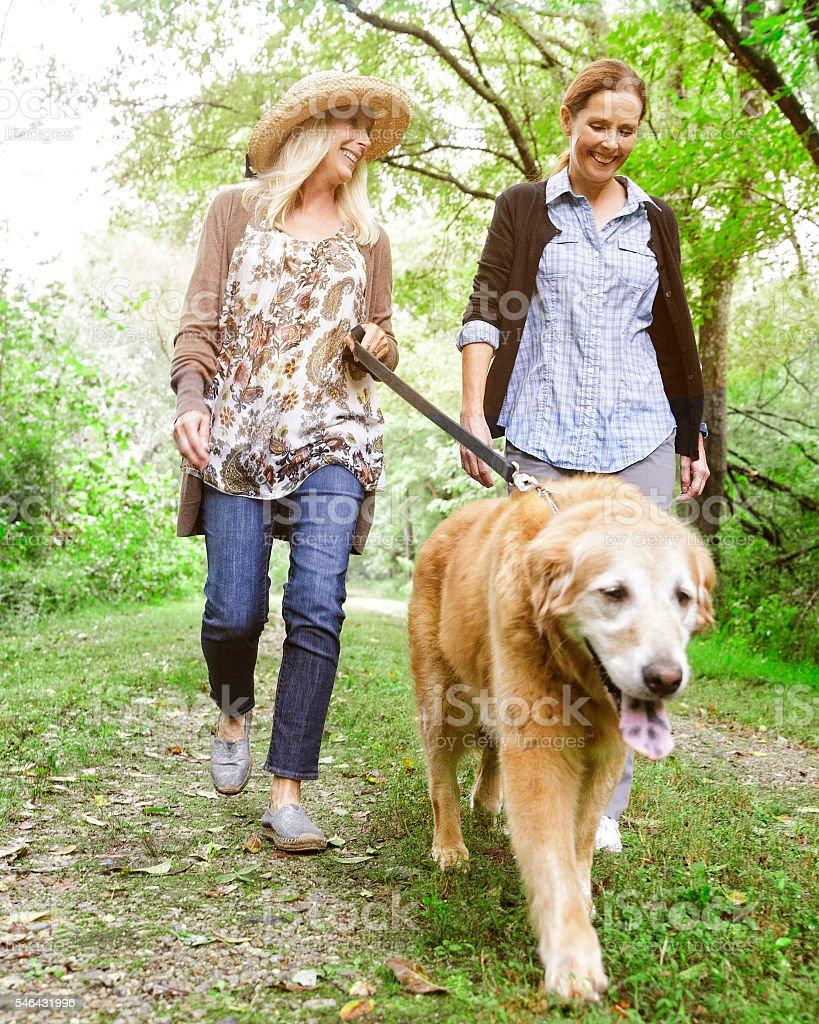 Walking Dog stock photo