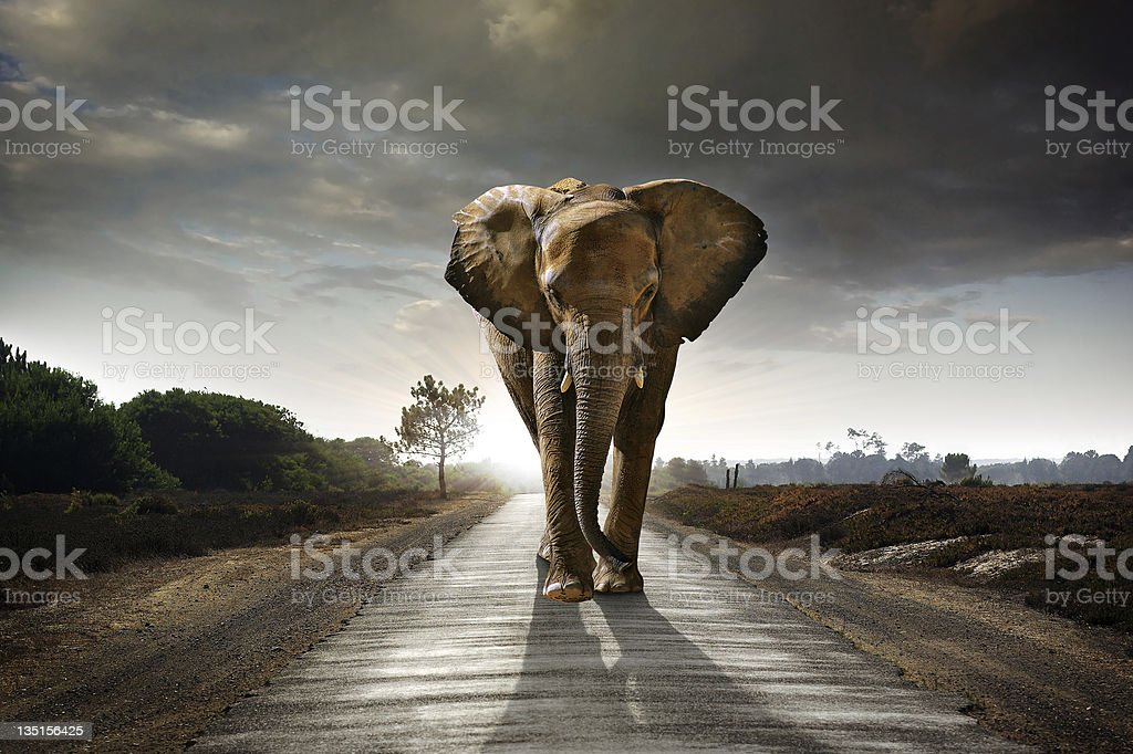 Walking Elephant stock photo