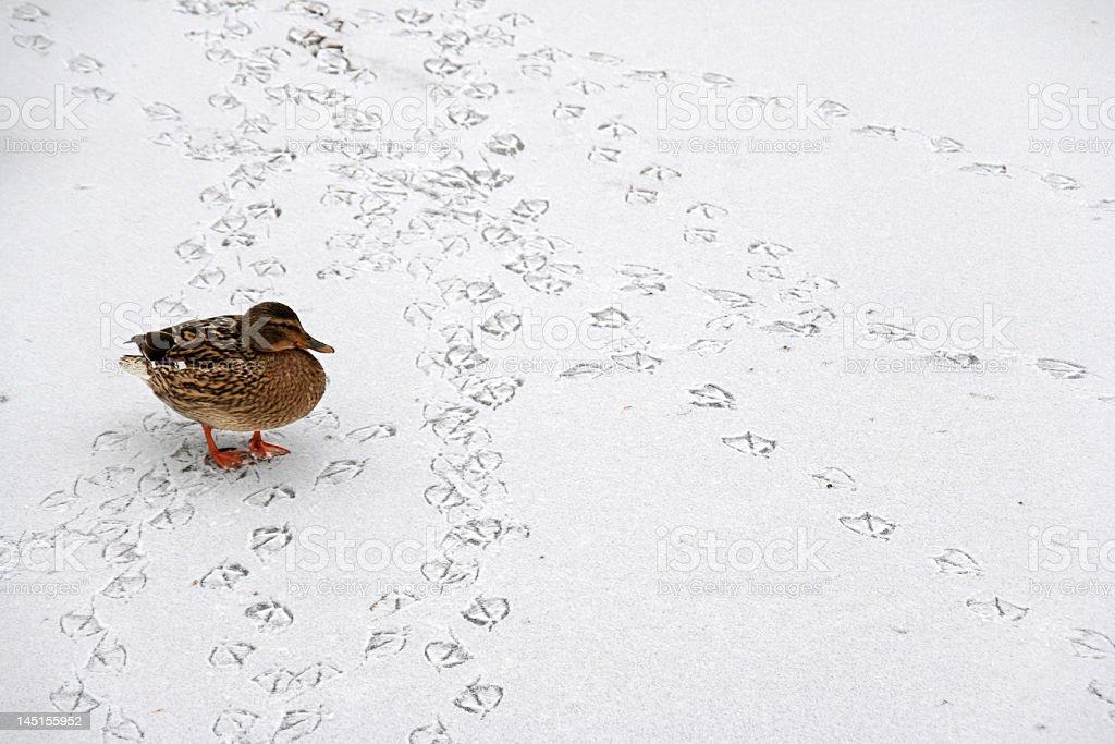 Walking in a Winter Wonder Land royalty-free stock photo