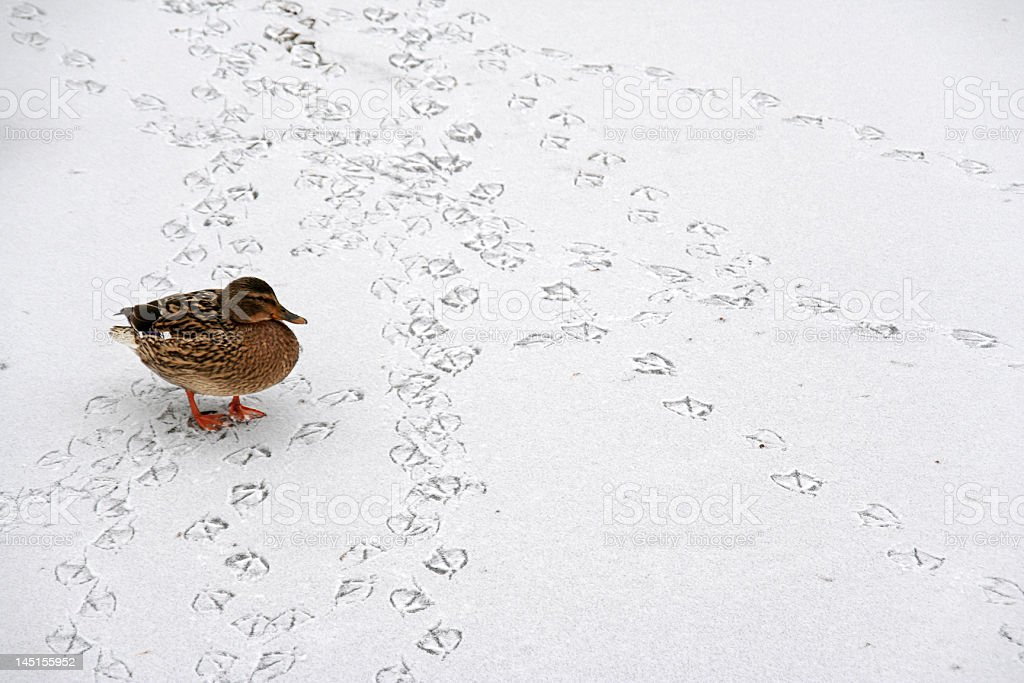 Walking in a Winter Wonder Land stock photo