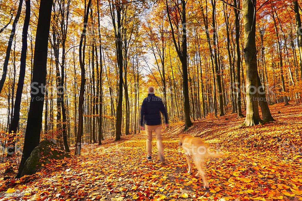 Walking in autumn forest stock photo