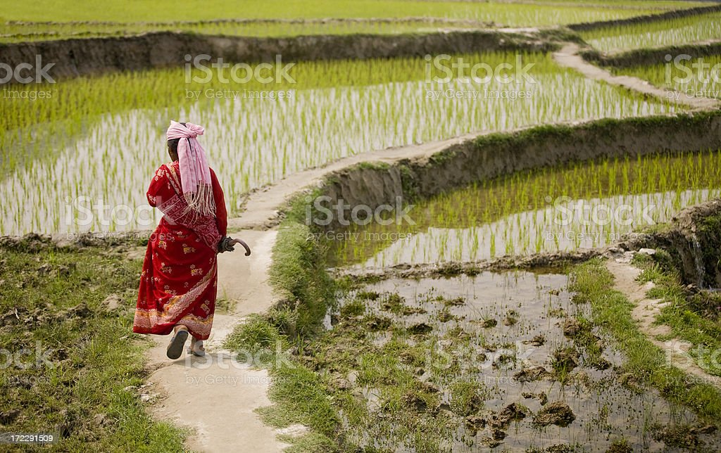 walking in rice royalty-free stock photo