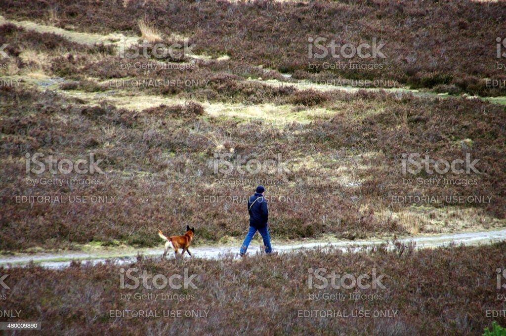 Walking in the heathland stock photo