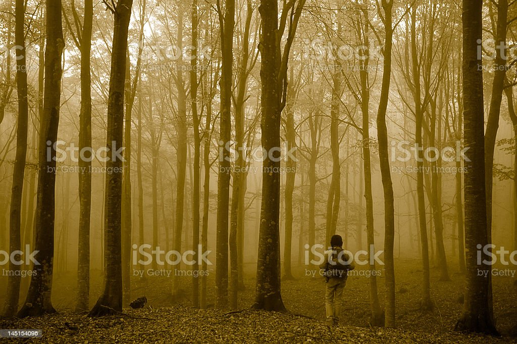 walking in the misty forest royalty-free stock photo