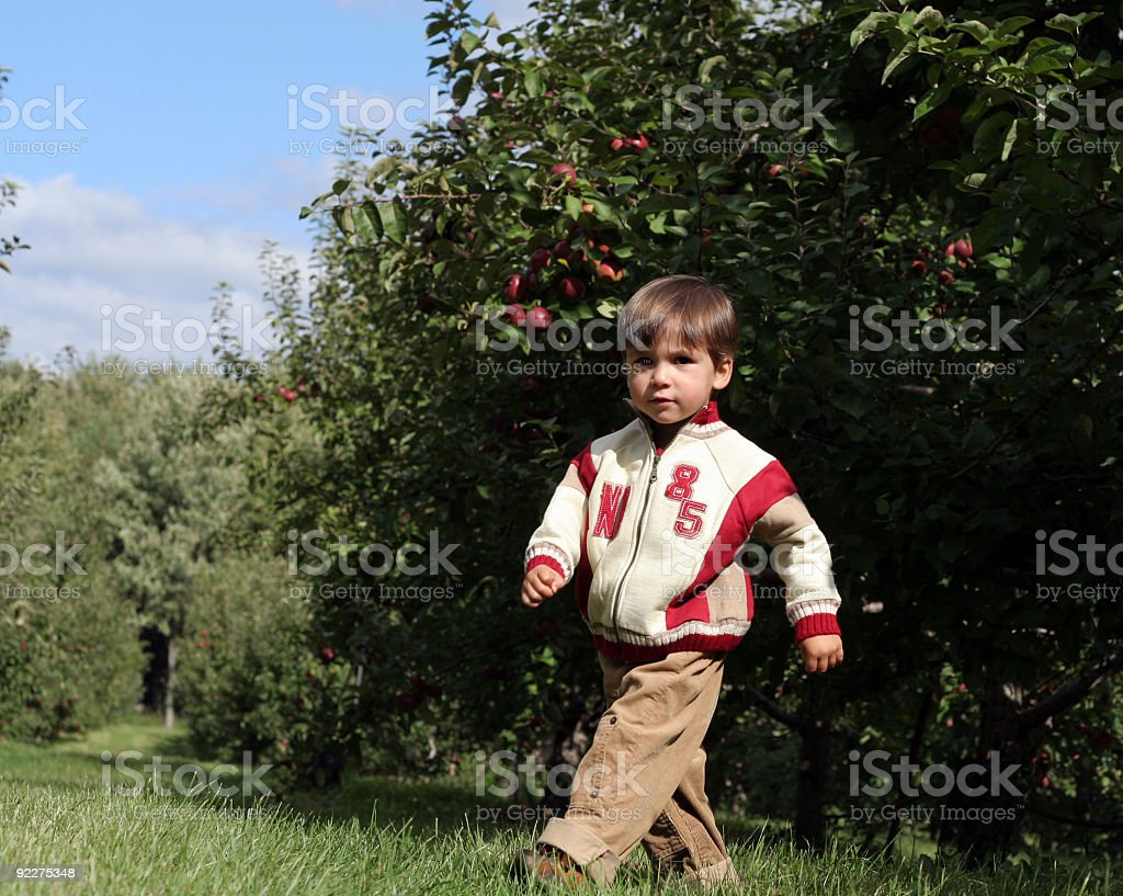 Walking in the orchard royalty-free stock photo