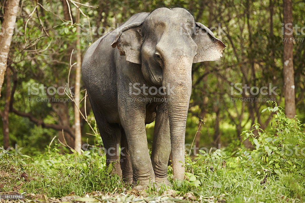 Walking in the wild royalty-free stock photo