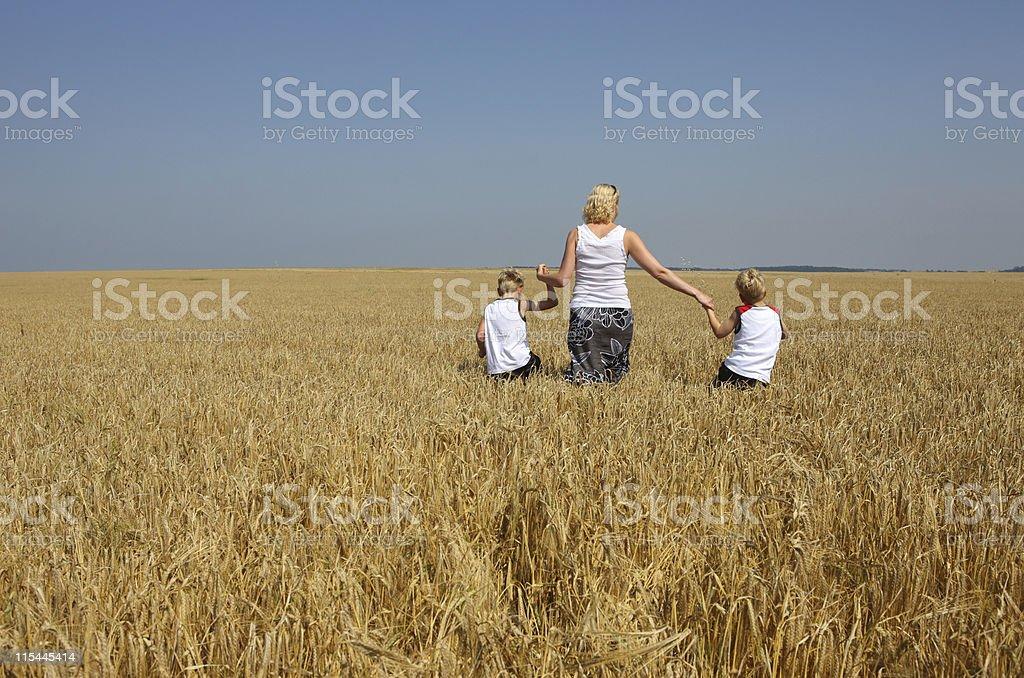 Walking In Wheat stock photo
