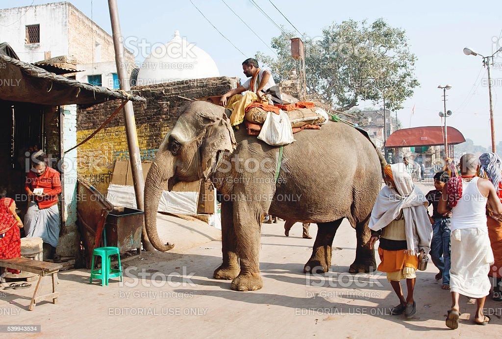 Walking indian elephant in crowded village street stock photo