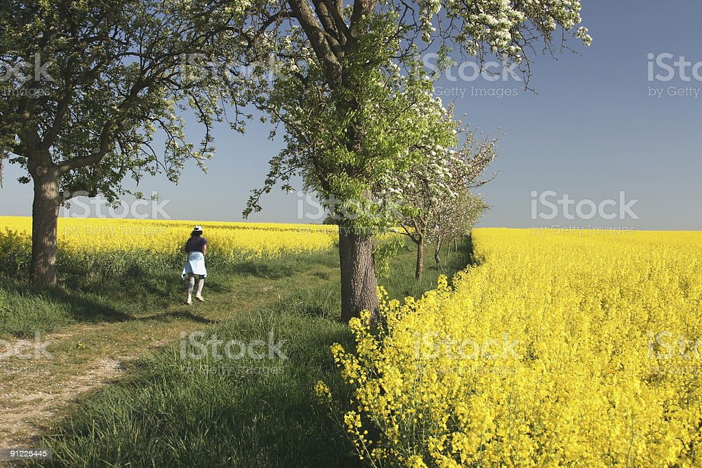 Walking into the Rapeseed Fields stock photo
