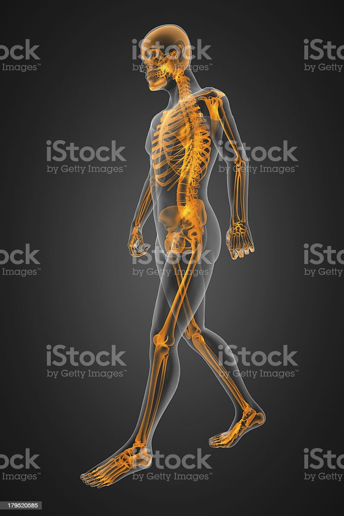 walking man radiography royalty-free stock photo