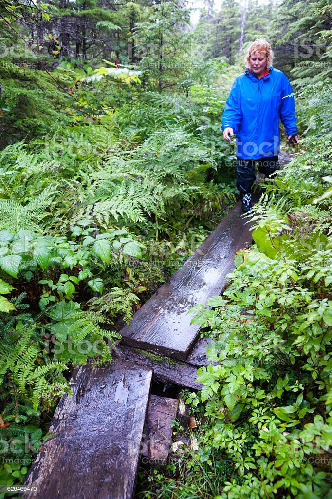 Walking on a planked trail through rainforest stock photo