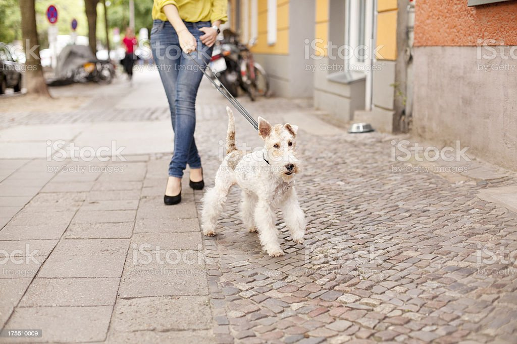 Walking outdoors with the dog stock photo