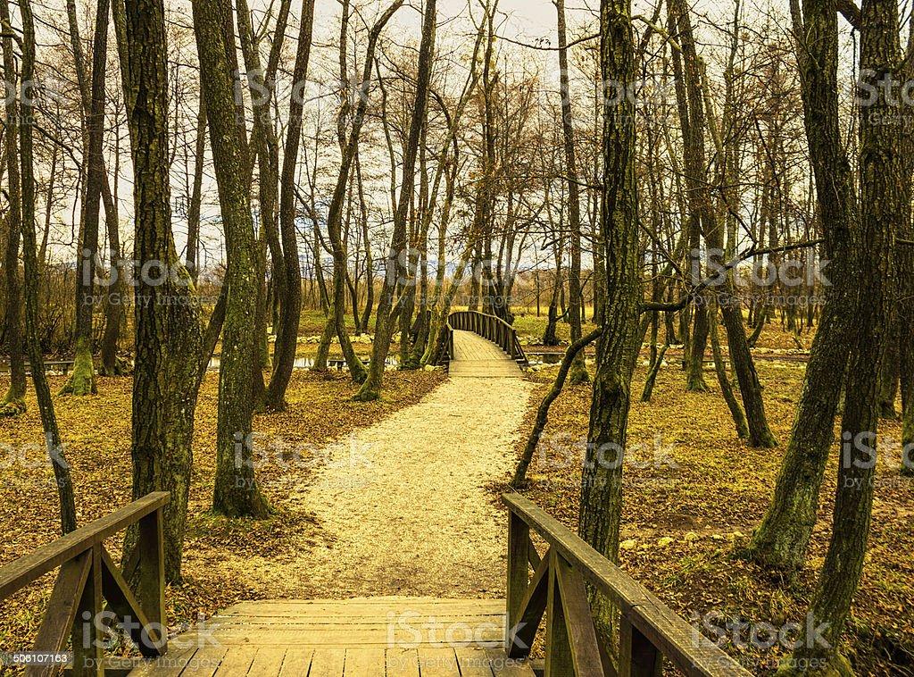 Trilha de caminhada no parque foto royalty-free