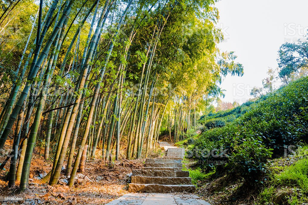 Walking path in Longjing stock photo