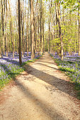 walking path in sunny flowering forest