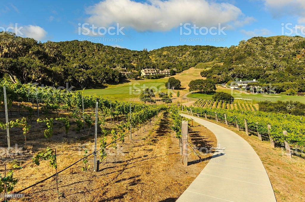 Walking path through a vinyard in mountains stock photo
