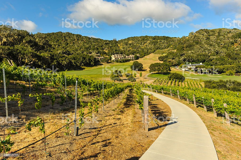 Walking path through a vinyard in mountains stock photo