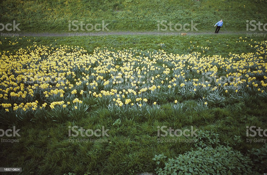 Walking the dog in beautiful floral grassy landscape stock photo