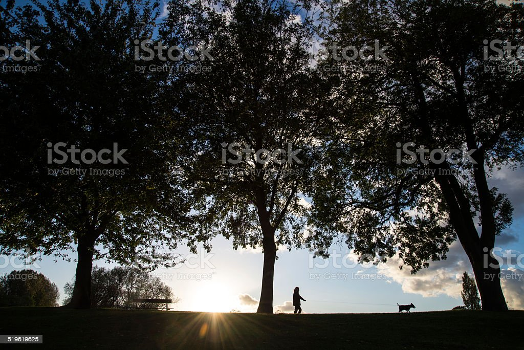 Walking the dog in the park. stock photo