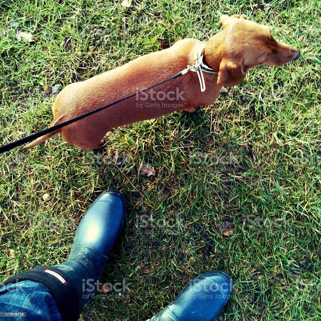 Walking the dog stock photo