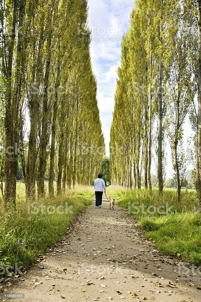 Walking the Dog-Related images below royalty-free stock photo