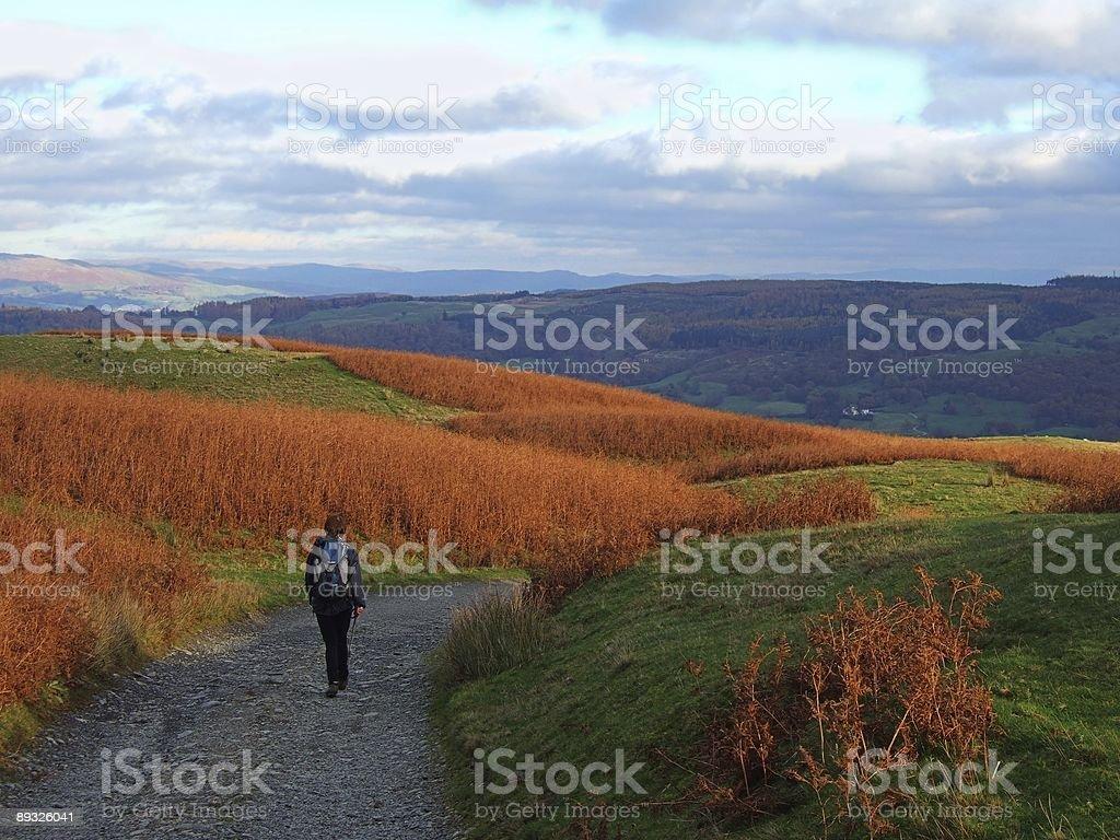 Walking through Bracken royalty-free stock photo