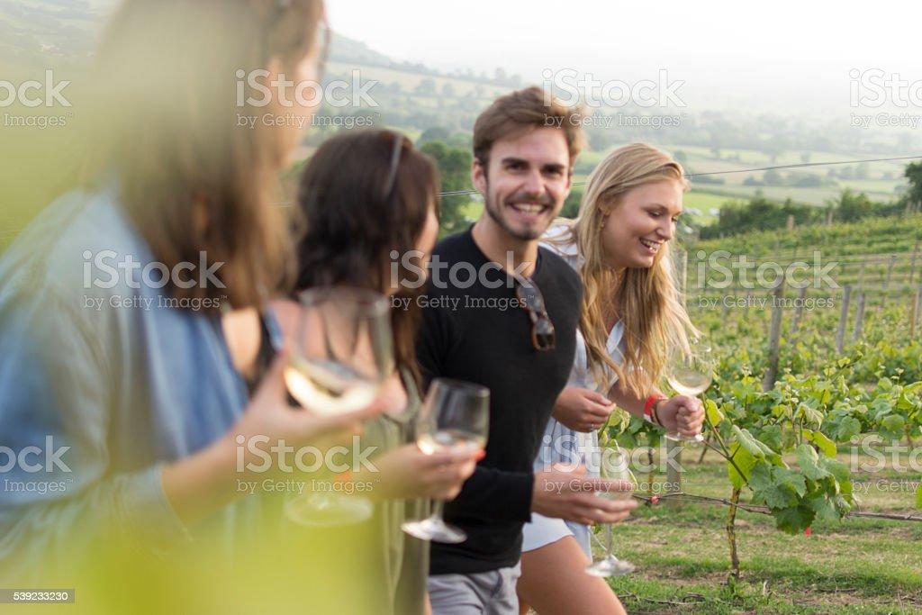 Walking through the vineyard stock photo