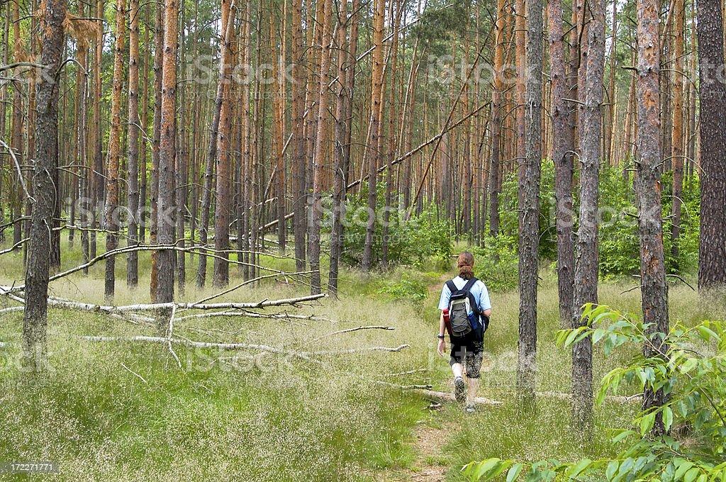 Walking through the woods stock photo