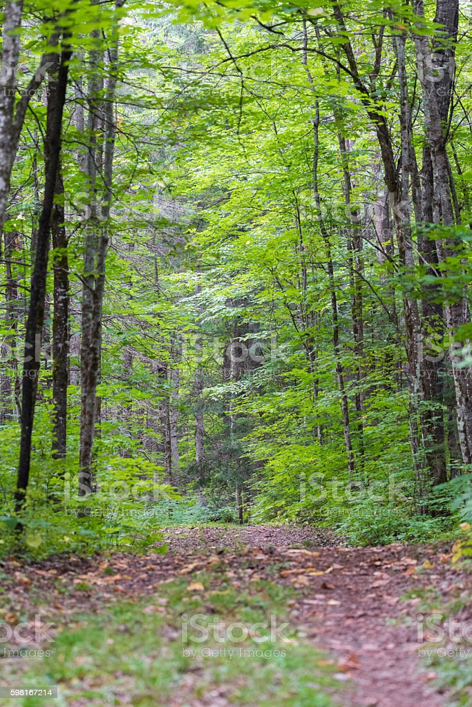 Walking trail along interior, young Eastern Ontario forest in summer. stock photo