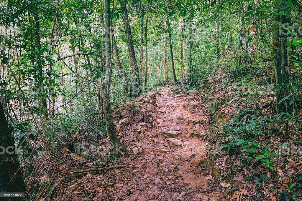 Walking trail in Thai tropical forest. stock photo