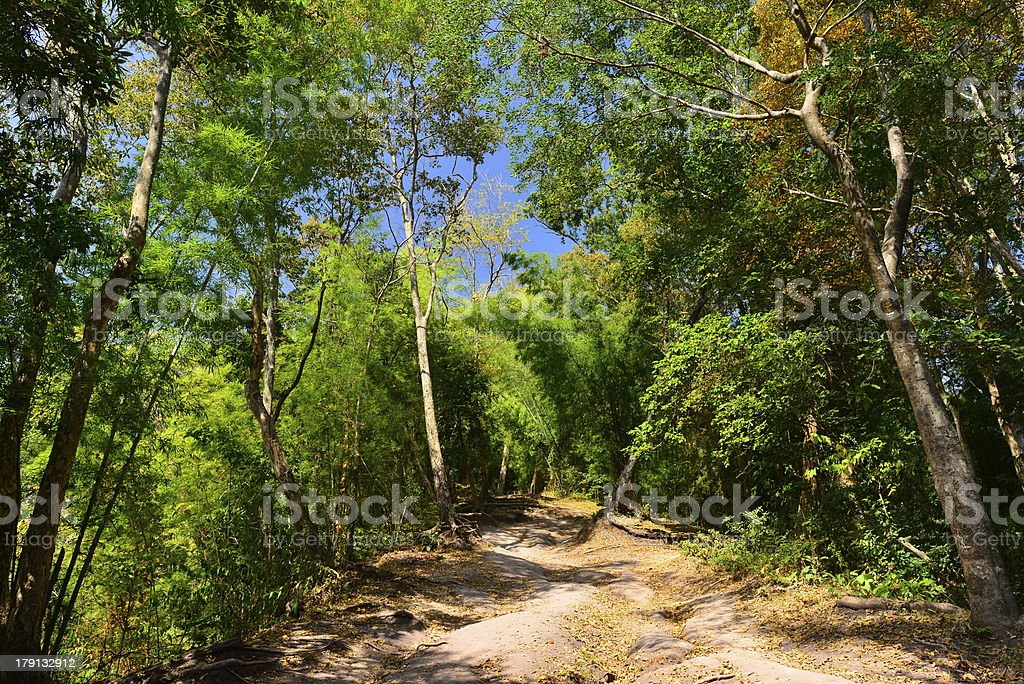 Walking trail in Thailand tropical forest royalty-free stock photo