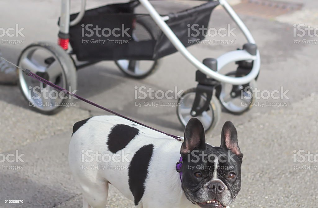 Walking with dog and children stock photo