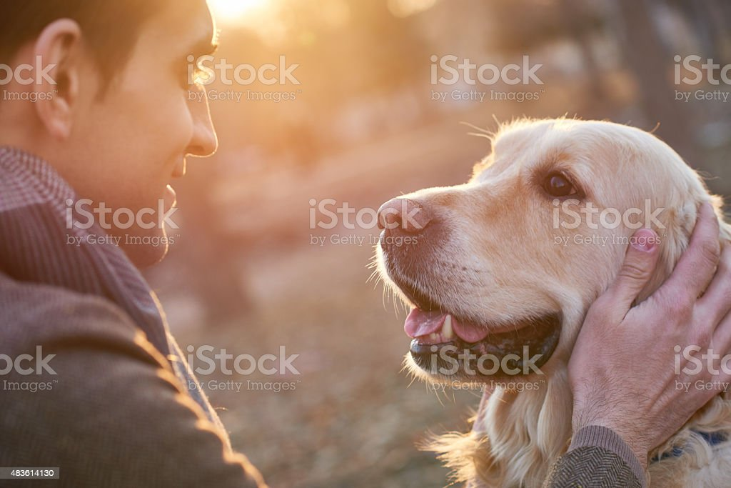 Walking with retriever stock photo