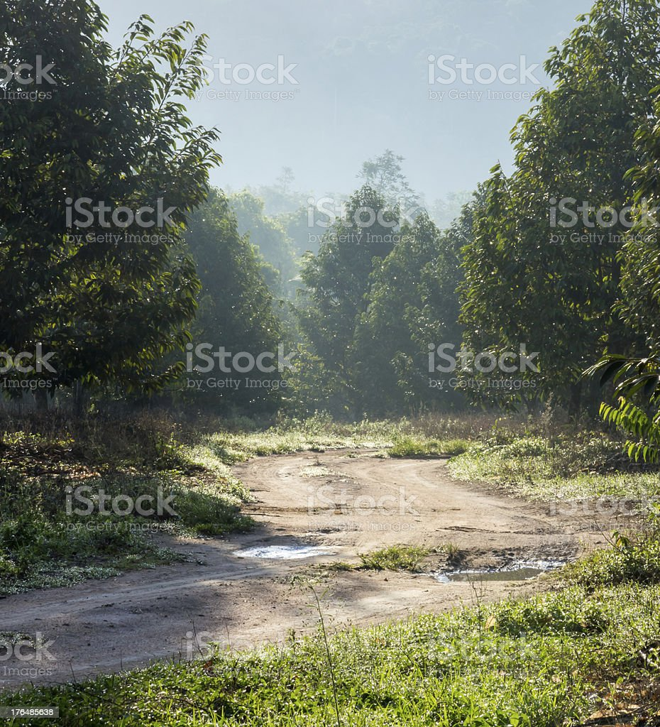 walkway after raining in countryside of orchard , Thailand royalty-free stock photo