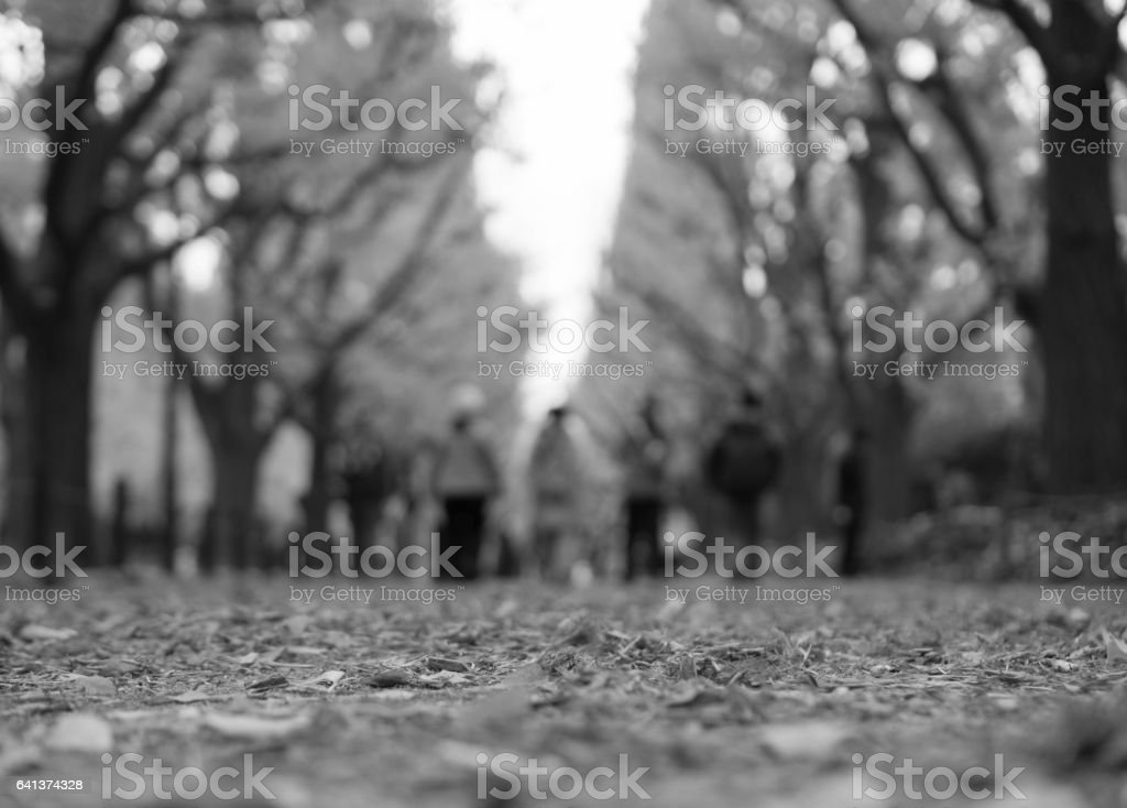 walkway covered with leaves, Autumn, Black and White, Selective focus stock photo