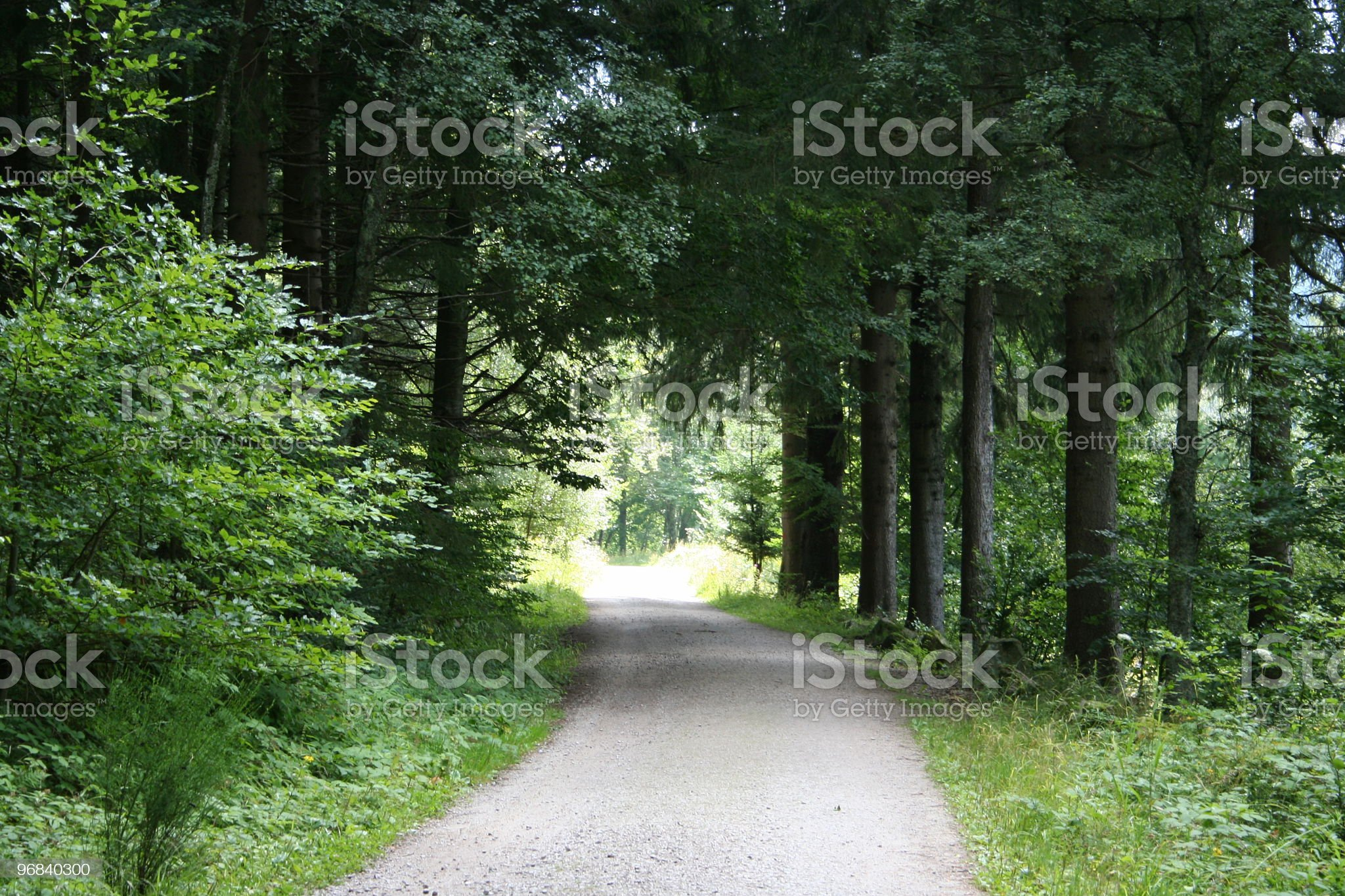 Walkway in a forest royalty-free stock photo