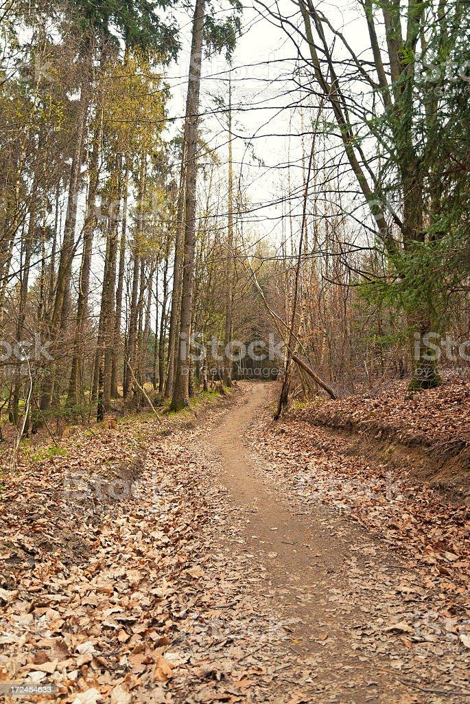 Walkway in Autumn royalty-free stock photo