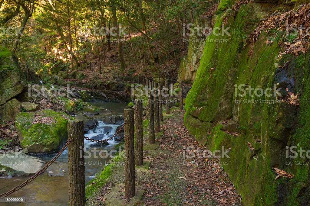 Walkway in forest. stock photo